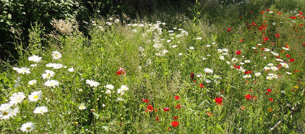 Wandel in de ongerepte natuur van de Ardennen.