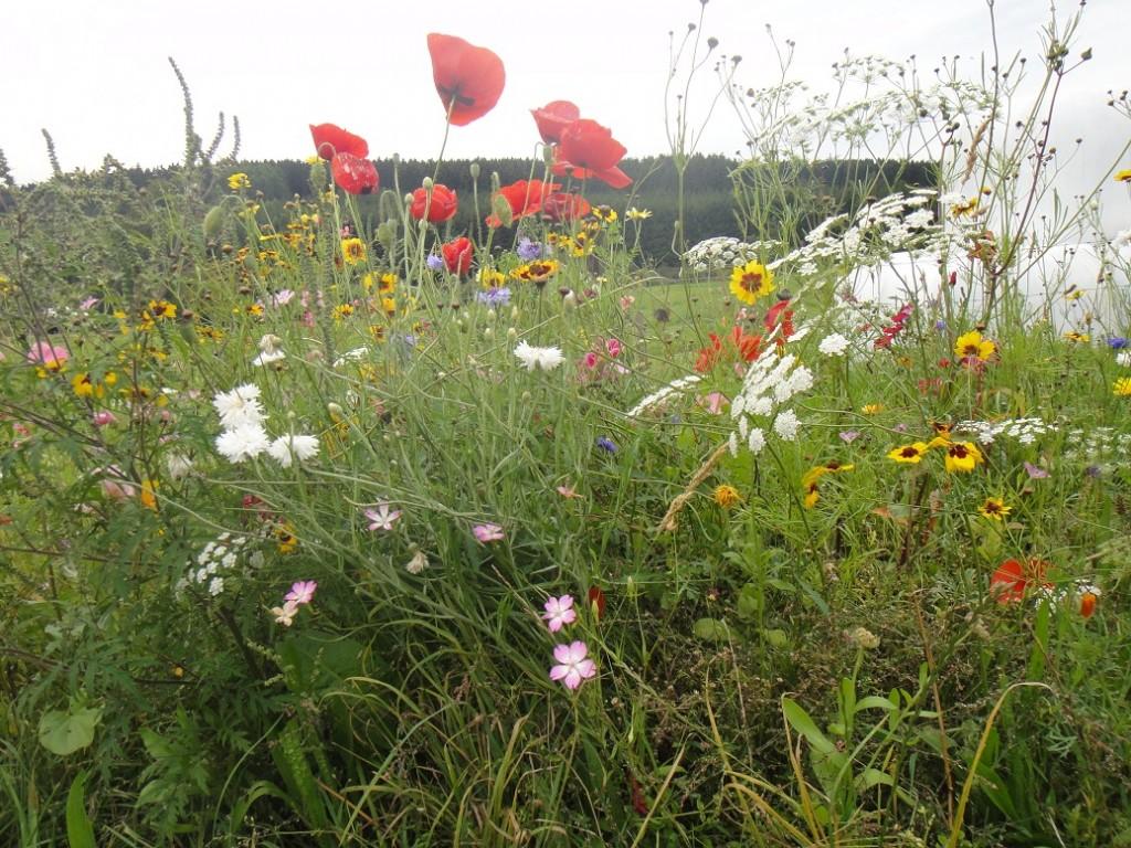 Zelfs in het begin van de herfst vindt je nog de mooiste bloemen, mooi!